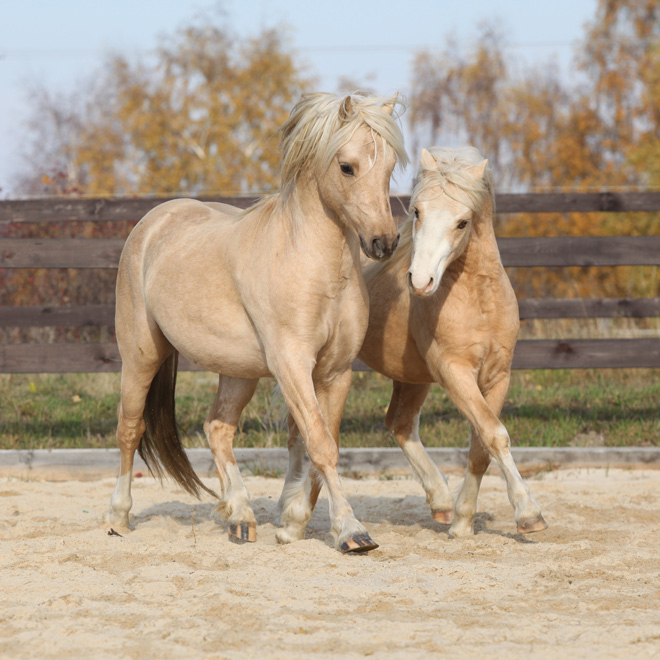 costs of owning a horse